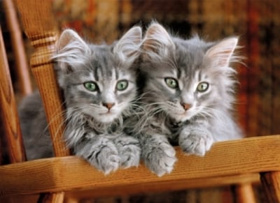 Puzzle Clementoni High Quality Kittens 500 Κομμάτια